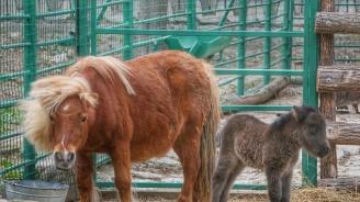 В Стара Загора обновяват градския зоопарк