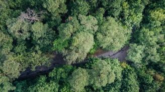 Над 40% от видовете дървета в Европа са застрашени от изчезване