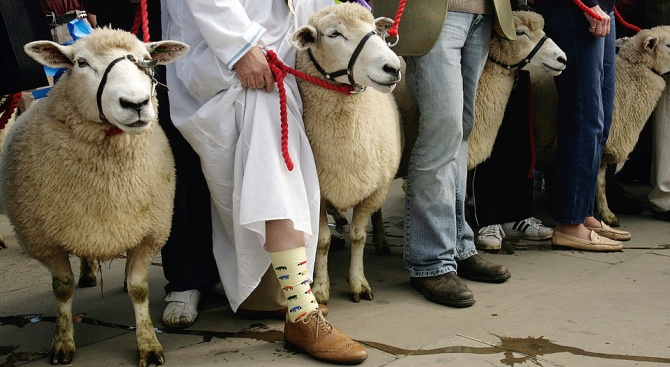 Блеещи овце традиционно преминаха по Лондонския мост