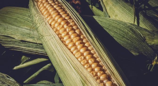 Панаир на царевицата ще забавлява малки и големи в Исперих.