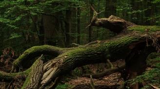 Ловът, сечта, брането на билки и гъби в Сливен се забранява заради случая на АЧС