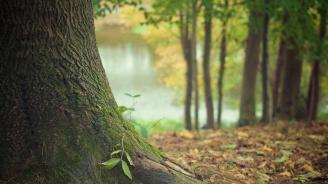 Премахват опасните дървета по туристическа пътека на Шуменското плато