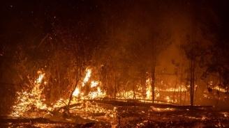Горят 20 декара иглолистна гора край село Стояново