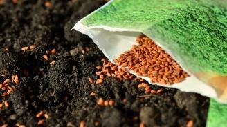 В Силистренско започна сеитбата на пшеницата и ечемика