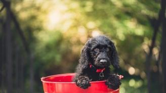 Безплатно обезпаразитяване на кучета ще има в пет столични парка на 12 октомври