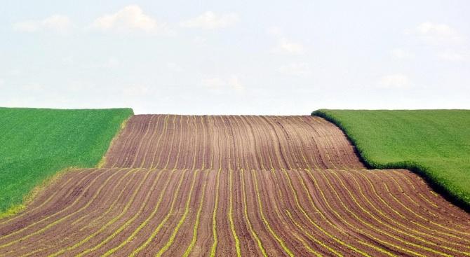 Първите пшенични посеви в Добричко поникнаха след валежите