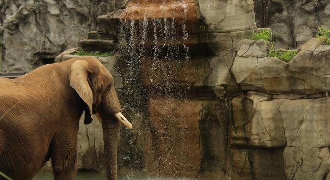 Шест слона загинаха в природен резерват в Тайланд, докато се