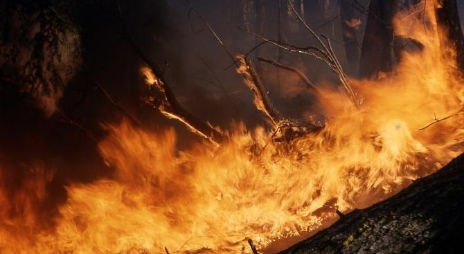 Бенефициенти на ДФЗ с глоби за запалени стърнища при установени 103 пожара