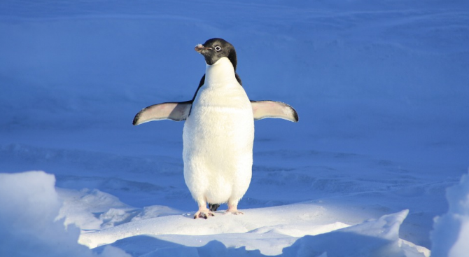 Пингвин е спасен след впечатляващо пътуване по море, за да