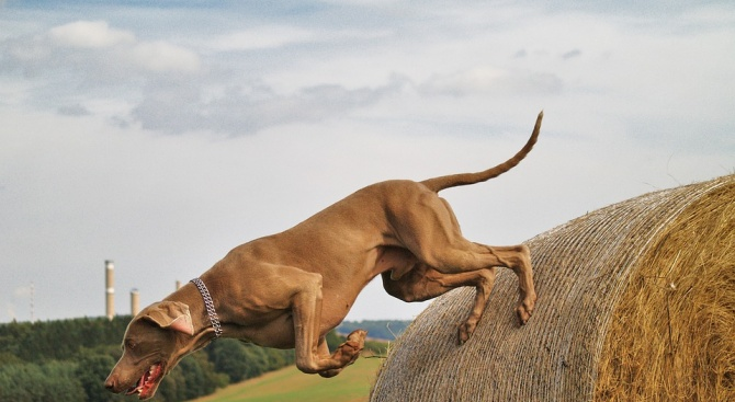 Полицията в Силистра разследва причиняване на смърт на ловно куче
