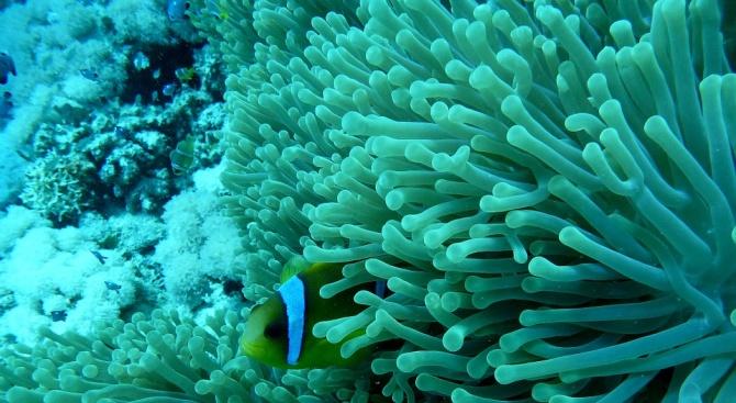 Корали отново израснаха в Средиземно море, след като се смяташе, че са измрели