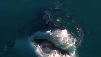 Сърфист, оцелял след нападение на акула: Сякаш ме блъсна автобус