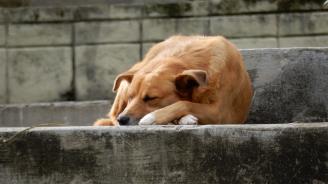 Бездомните кучета в София намалели три пъти