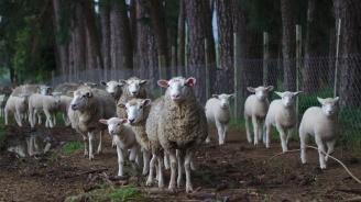 Животновъдите получават 35,6 млн. национални плащания за Кампания 2019