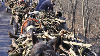 Спипаха три каруци с незаконни дърва в Плевенско, закопчаха двама
