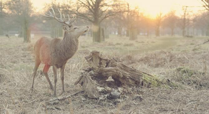 Болест, която на практика превръща диви елени в зомбита, е