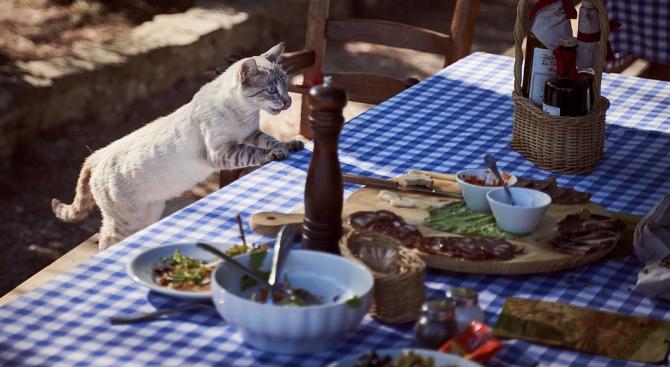 Яденето на сурово месо от кучета и котки е често