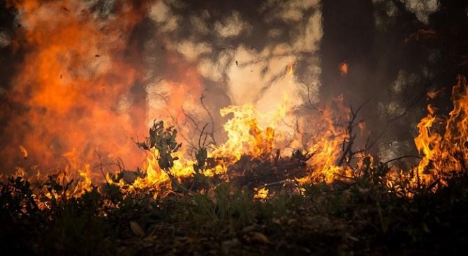 Над 3000 декара сухи треви и храсти са изгорели през