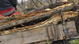 Ветовските полицаи хванаха двама, извозвали незаконно дървесина