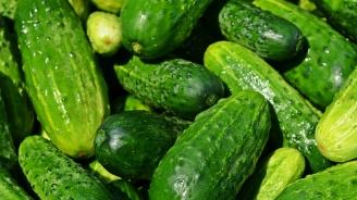 Африканска краставица е най-атрактивната стока, предложена на пернишкия пазар