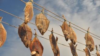 БАБХ с подробности за опасната пушена риба, разпространена из страната