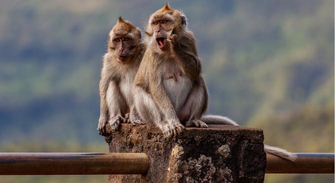 """Учени в Малайзия съобщиха, че са """"шокирани"""" от откритието си"""