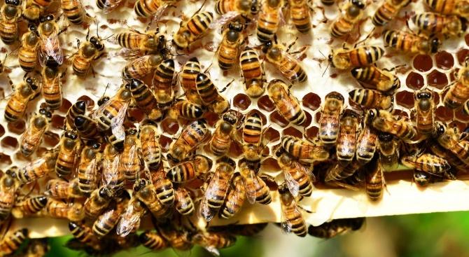 Пчеларите получават 4,5 млн. лева по de minimis