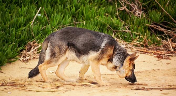 Кучета помогнаха на хърватски археолози да открият погребения на 3000 години