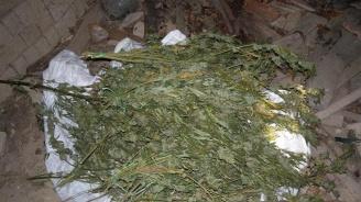 Над 42 кг сух канабис са открити при мащабна операция на МВР-Видин