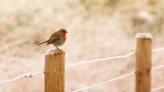 Най-шумната птица пее, за да открие любовта