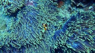 Кораловото покритие около острови от Големия бариерен риф е намаляло наполовина