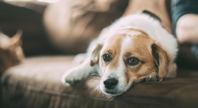 Жена подарява дома си срещу грижа за кучета