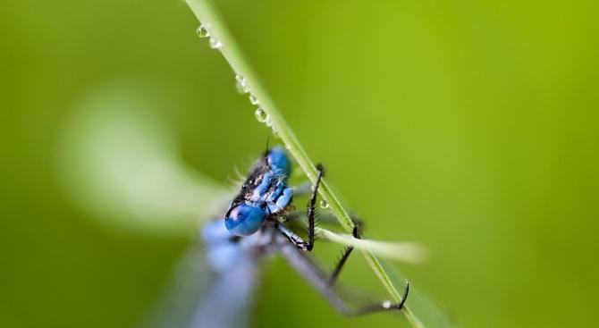 Бразилски изследователи са открили нов вид насекоми от семейство Keroplatidae,