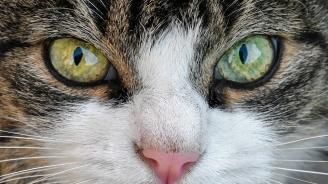 5 г. затвор заплашват московчанин, атакувал полицай с котка
