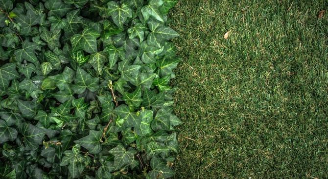 Изкуствена растителност превръща въглероден диоксид в гориво