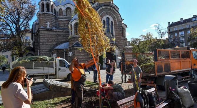 """Посадиха нова върба пред църквата """"Свети Седмочисленици"""""""