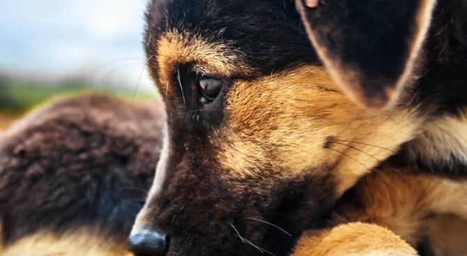 Задържаха 71-годишен мъж за жестокост към куче в Ямболско