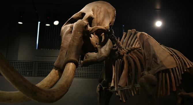 Мексикански антрополози оповестиха, че са открили два рова, които са