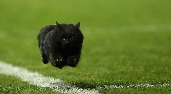 Котка прекъсна спортно събитие в САЩ