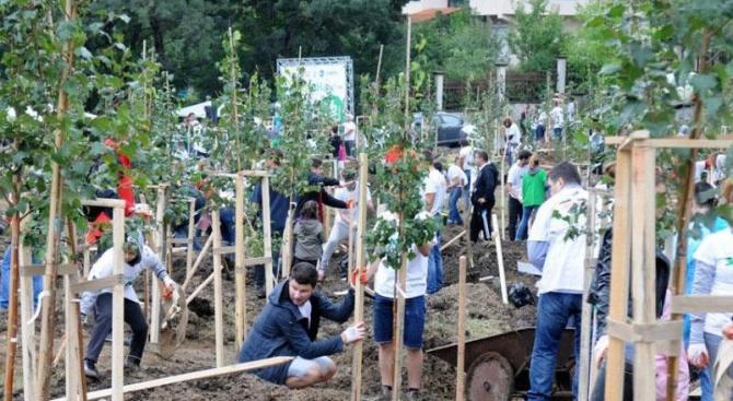 Бизнесът помага за въстановяване на увредени гори на територията на ЮЗДП