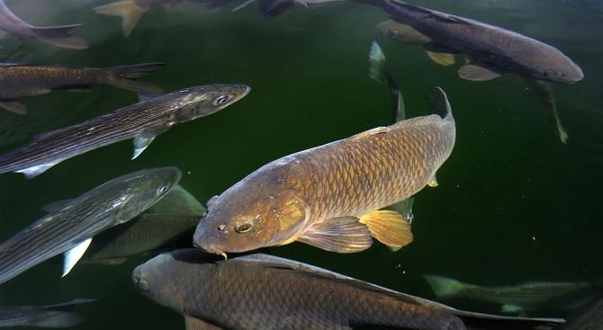 Риба с човешко лице се появи в езеро в Китай