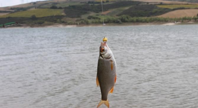 Снимка: Община Монтана даде на концесия два язовира за промишлено отглеждане на риба