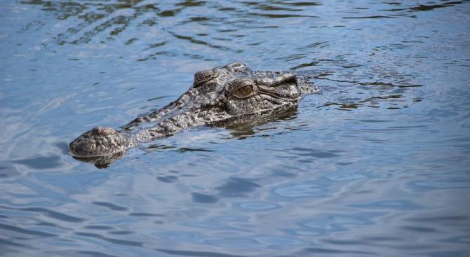 Рейнджър се освободи от зъбите на крокодил в отдалечен район