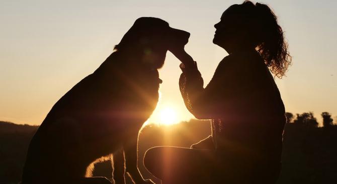 Наказанията и виковете могат да увредят психиката на кучетата