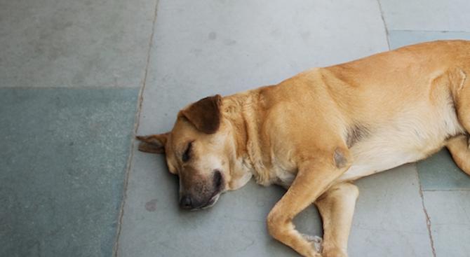 Застреляха кучета в софийско село