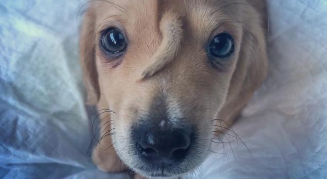 """Кученце """"еднорог"""" попадна в приют за животни в американския щат"""