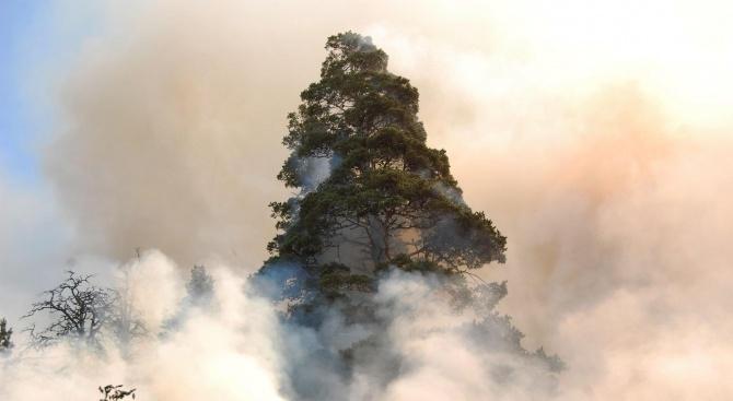 Пожар горя над Трявна