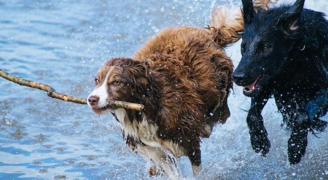 Три жени се удавиха при опит да спасят кучета в