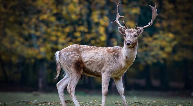 Фотограф от щата Мичиган засне трирог елен в горска местност,