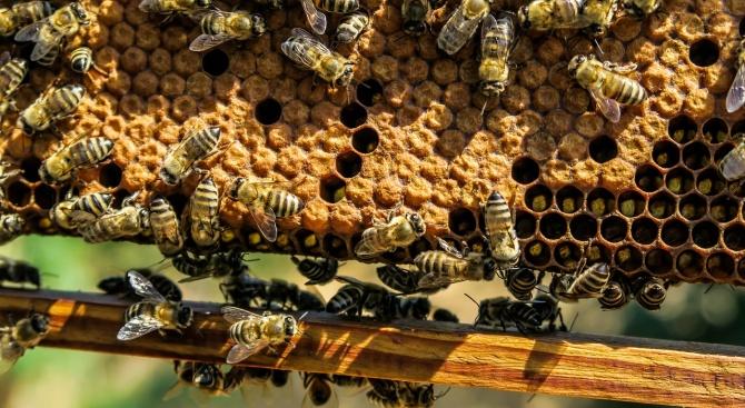 Пчелари от Смолян настояват за по-строг контрол на нерегистрираните пчелини,